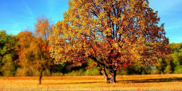 Imagen explicar el otoño