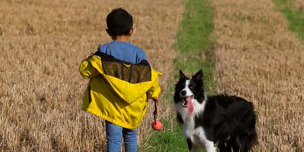 Imagen niños y perros
